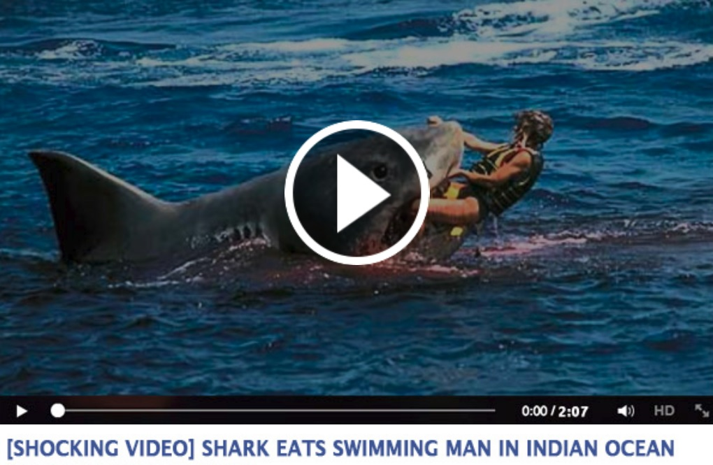 Facebook Users Scammed by Fake Shark Video