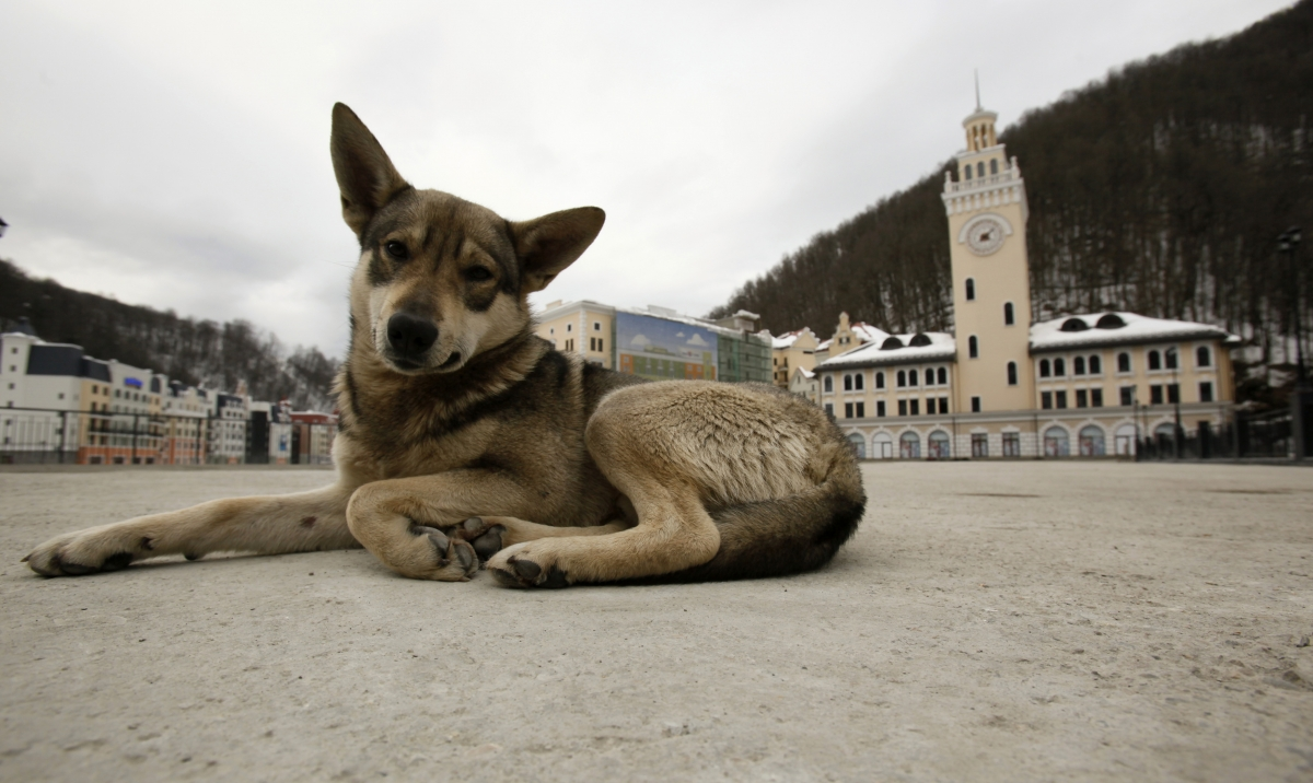 stray-dog.jpg?w=500&h=298&l=50&t=40