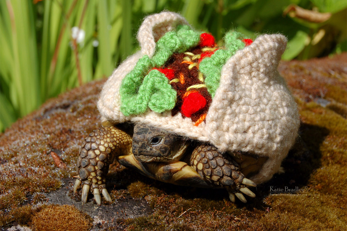 Animal Lover Katie Bradley Sells Crocheted Outfits for Tortoises and a ...
