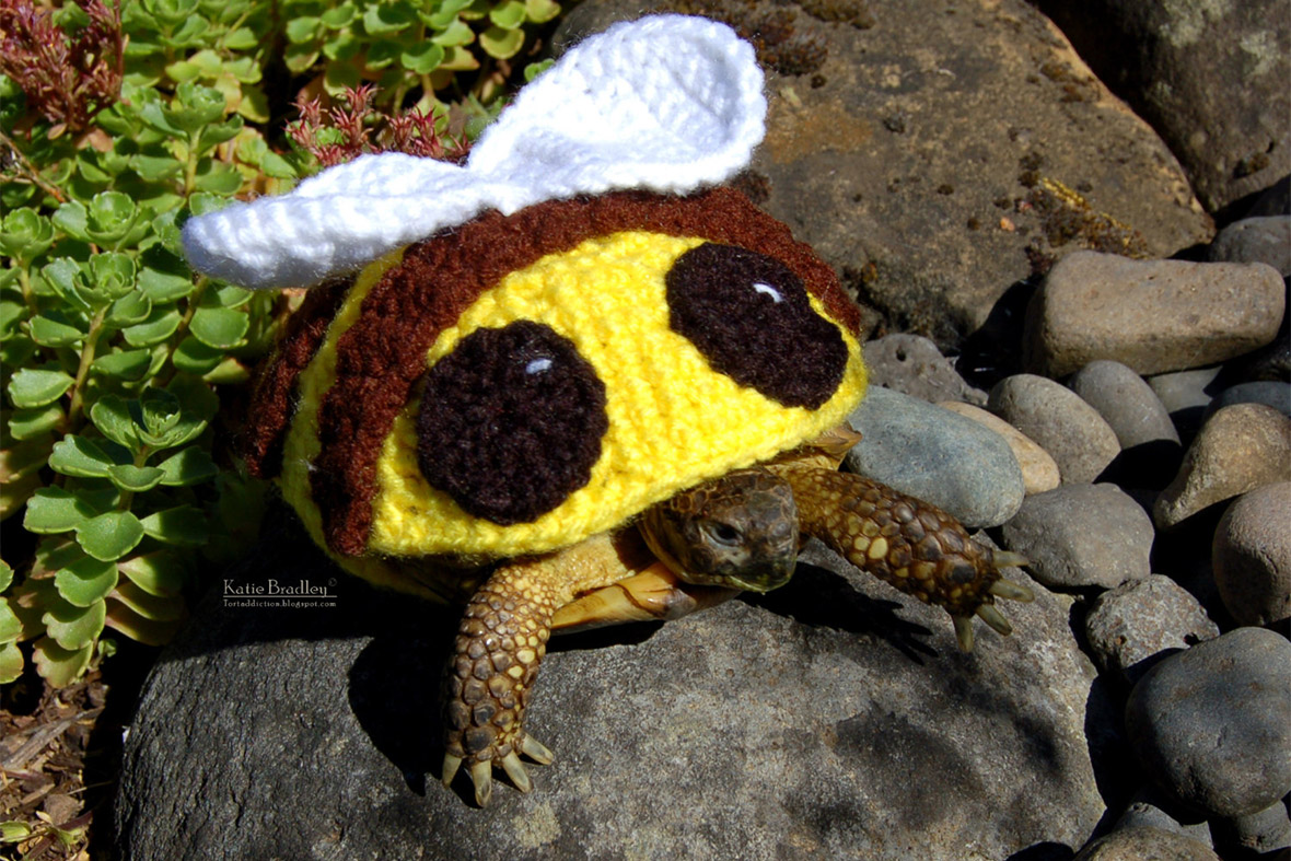 Knitting Pattern For Tortoise Coat : Animal Lover Katie Bradley Sells Crocheted Outfits for ...