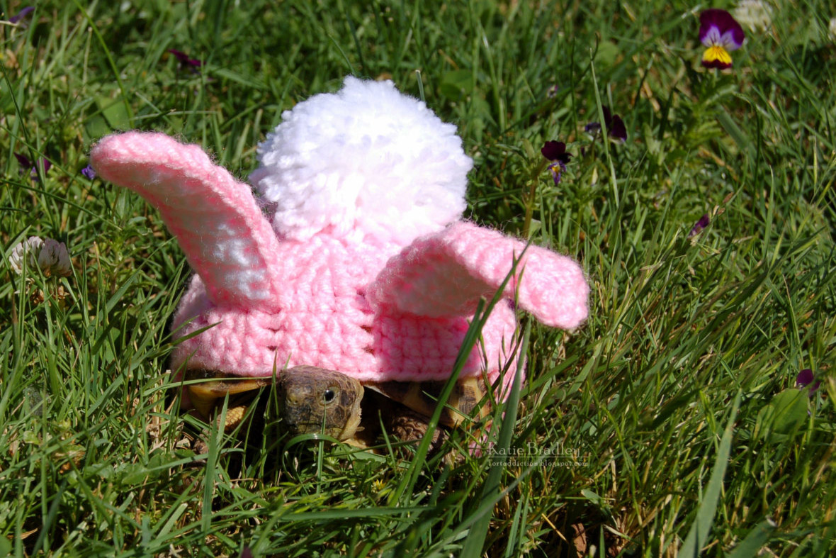 animal lover katie bradley sells crocheted outfits for tortoises and a