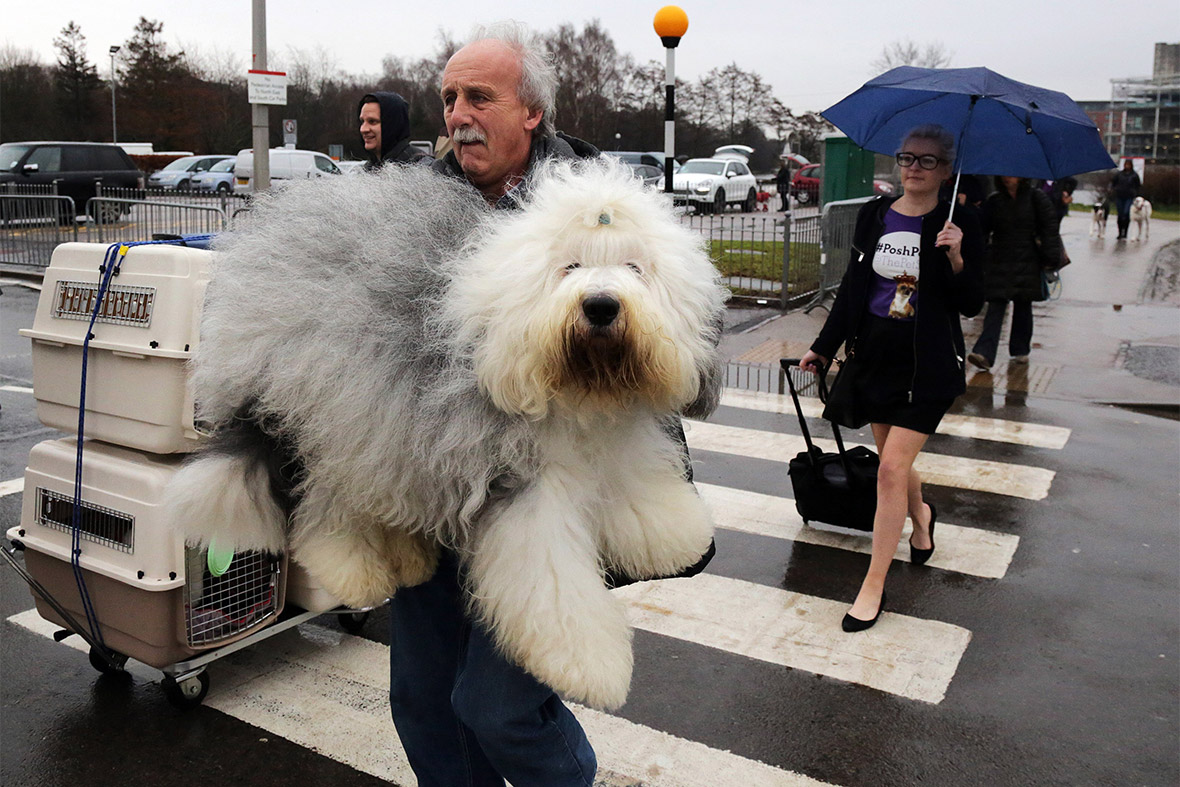 The event has a... Largest Dog In The World 2014