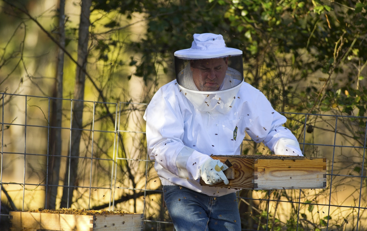 An Italian apiary has been attacked in a suspected Mafia hit