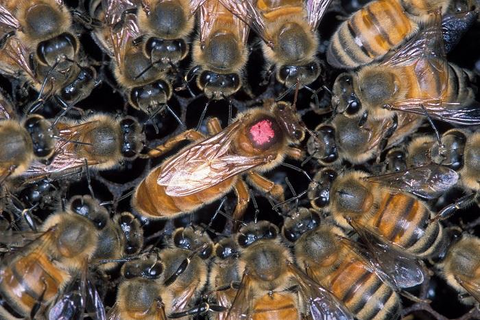 Huge Swarm of Killer Bees