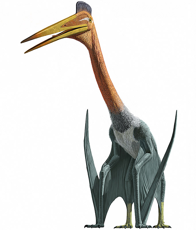 http://d.ibtimes.co.uk/en/full/1372040/quetzalcoatlus.jpg
