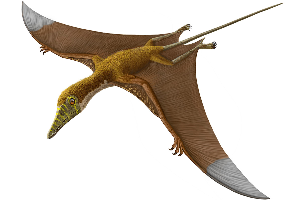 Pterosaurs, Flight in ...