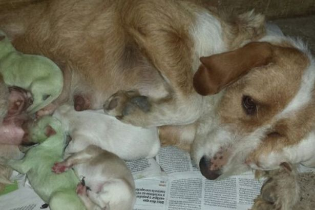 Puppies born green in Spain stunned owners