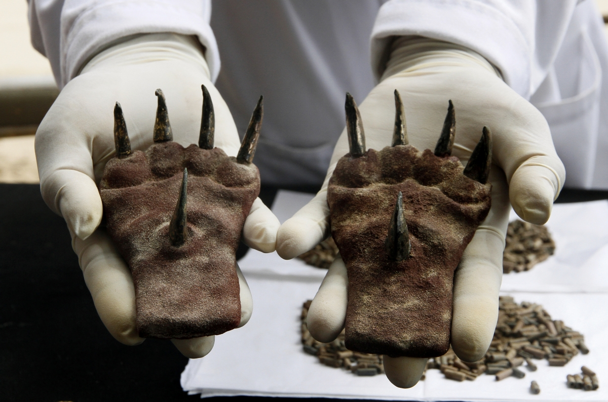 A pair of metal claws found at a tomb from the Moche culture recently excavated at the Huaca de la Luna archaeological site in the city of Trujillo