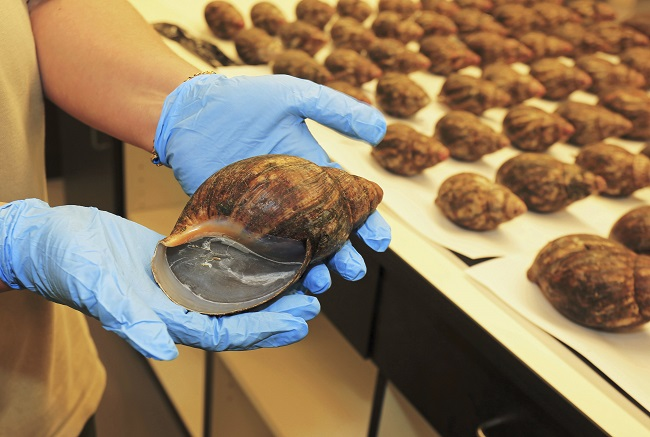 Snails seized at Los Angeles International Airport