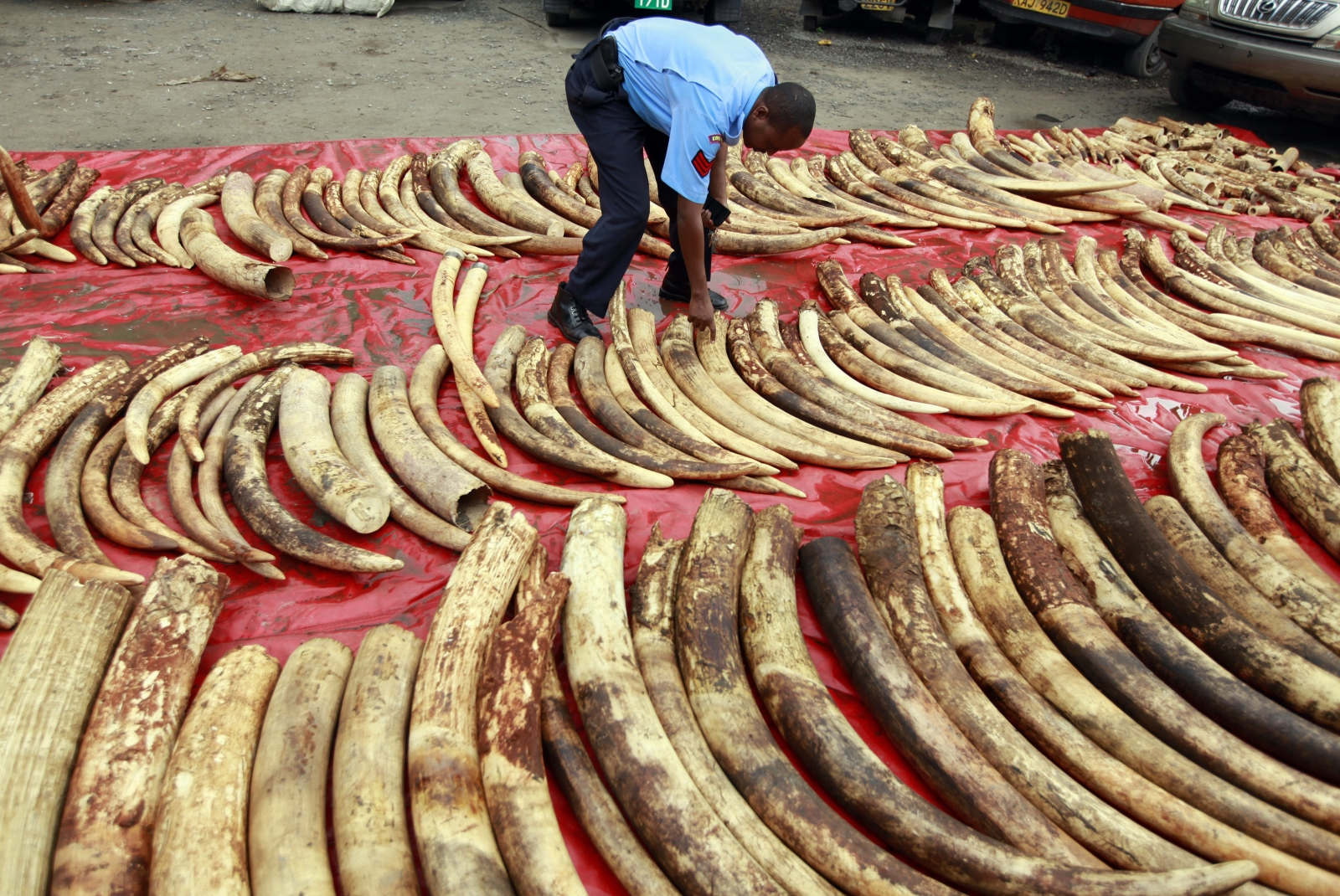 the ivory trade ban essay