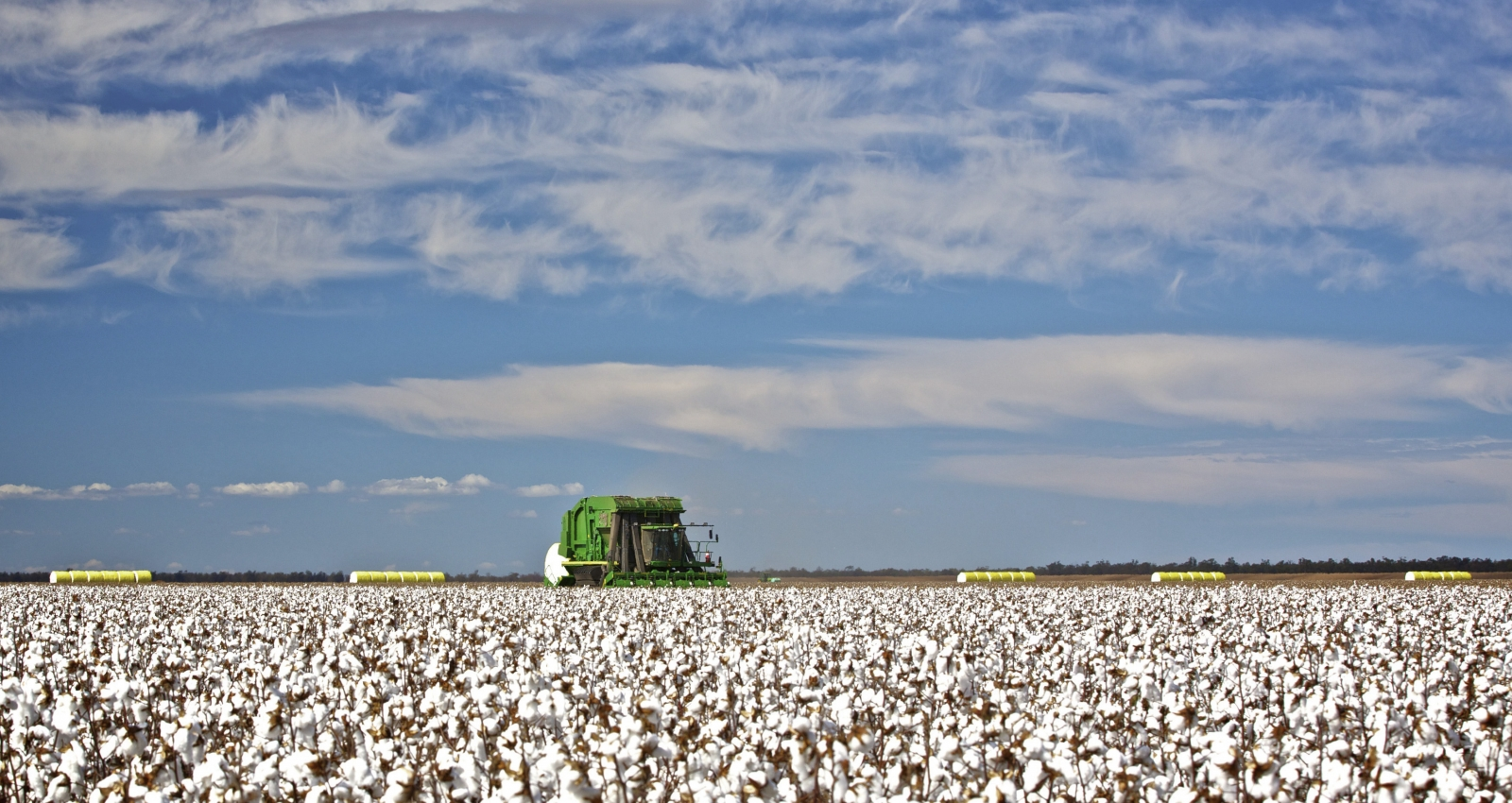 Australia cotton field