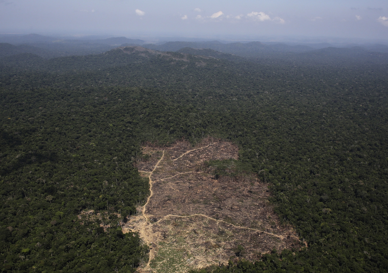 a report on the deforestation in brazil Last december, a government report said deforestation in the brazilian amazon had fallen to its lowest rate for 22 years however, the latest data shows a 27% jump in deforestation from august .