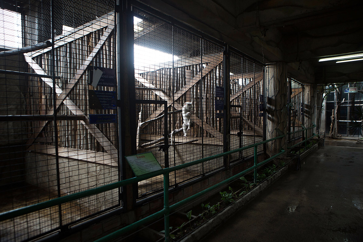Thailand: Campaign to Free Gorilla from High-Rise Zoo in Bangkoks Pata D...