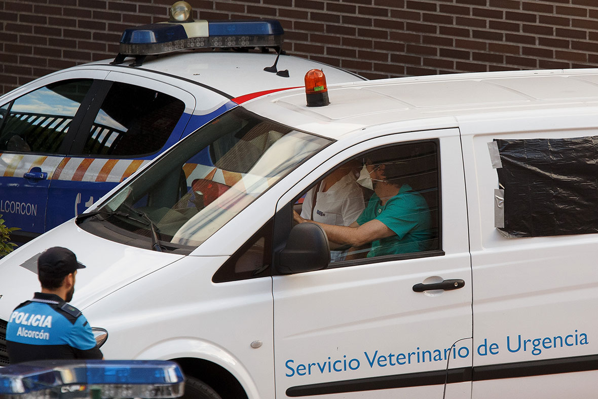 Ebola escapes Europe's defenses; infected nurse's pet dog must die ...