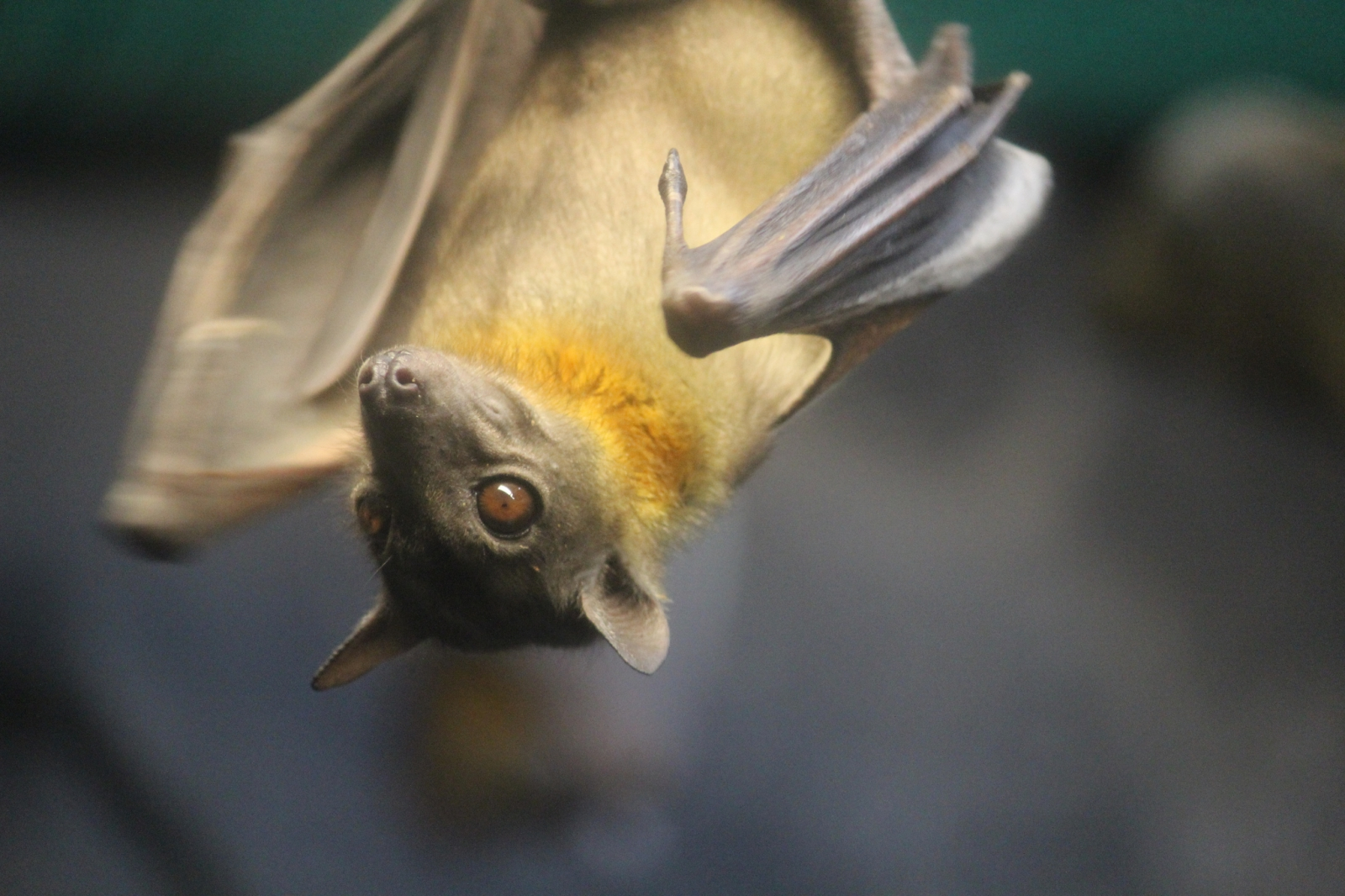 fruit bats healthy fruit loaf