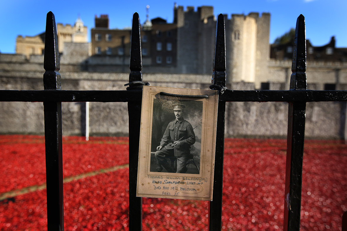 Tower of London Poppies Images Tower of London Poppies a