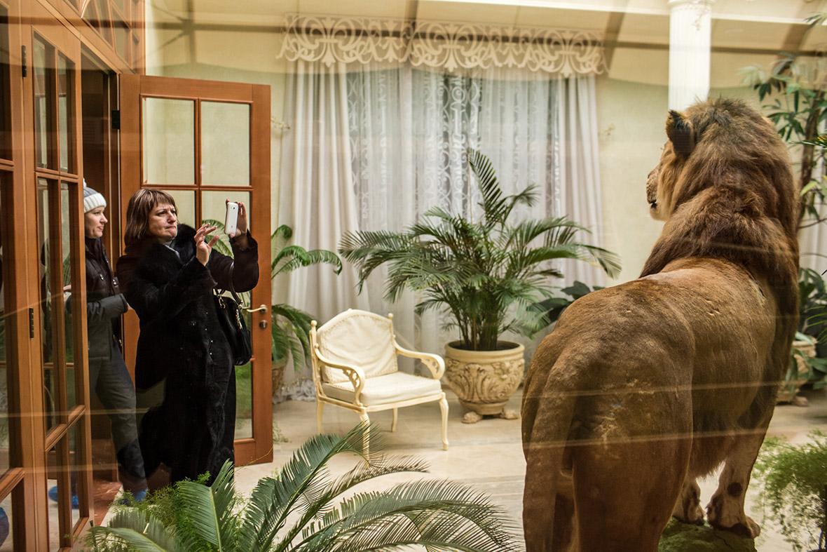 Фото | Чучело льва в доме Януковича