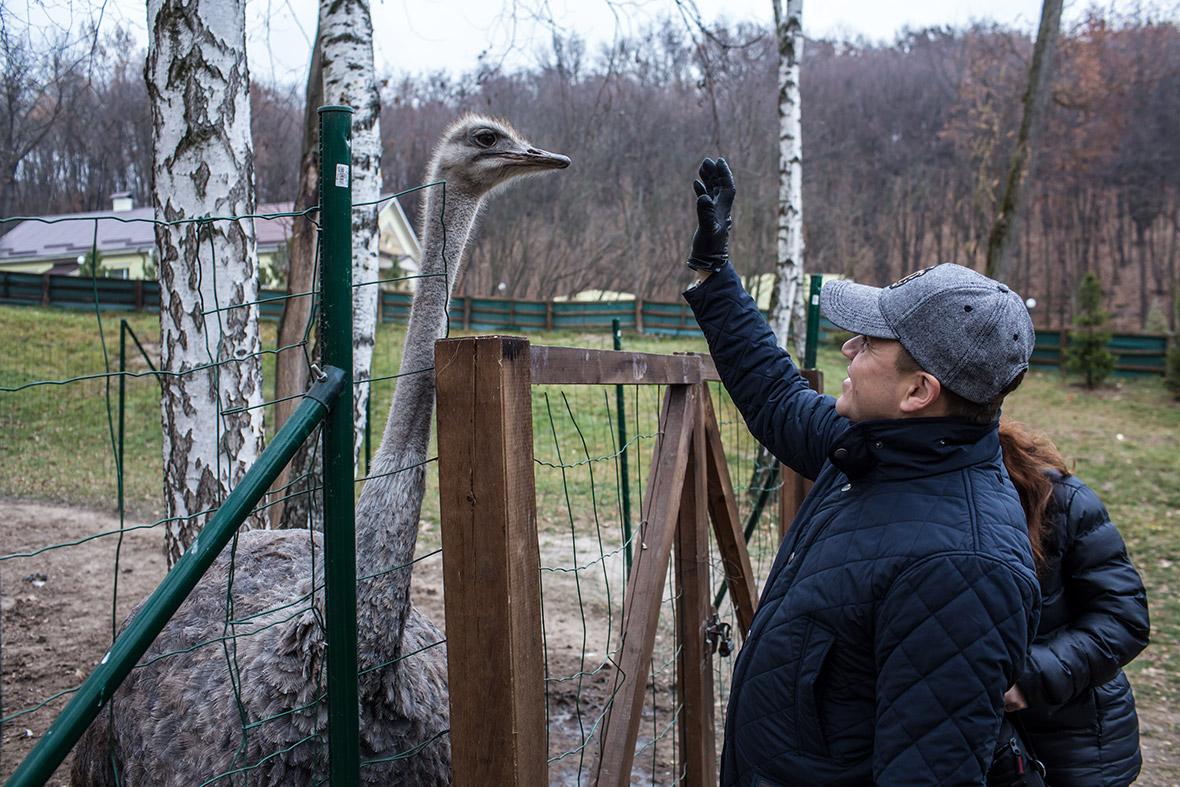 Фото | Вольер со страусами у Януковича в Межигорье
