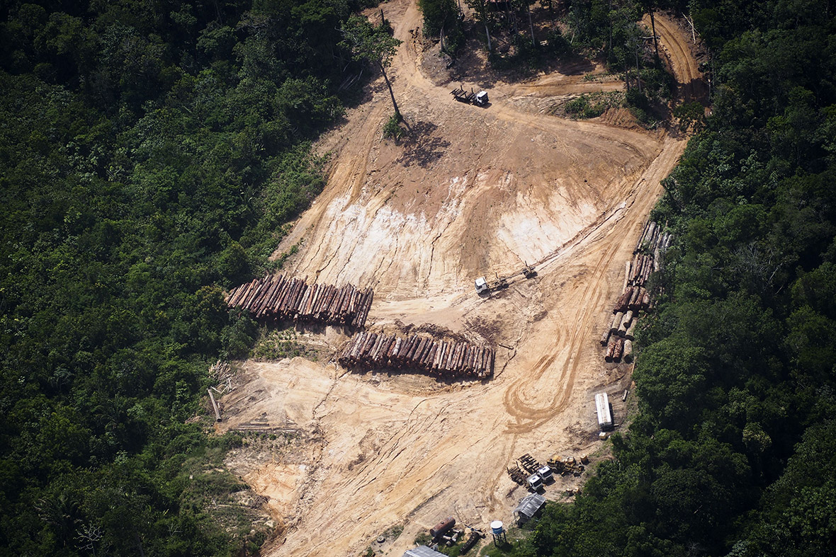 deforestation of the amazon Deforestation facts for kids  deforestation is when forests are converted for other purposes by cutting down the trees to clear  the amazon in south america.