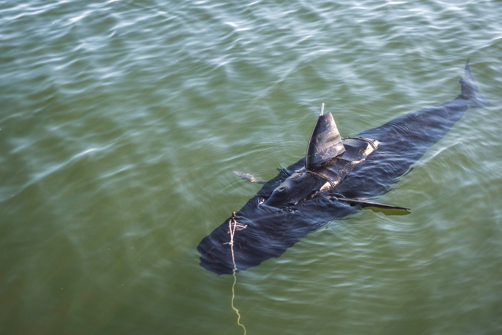 Navy unveils 'Ghost Swimmer' robot fish