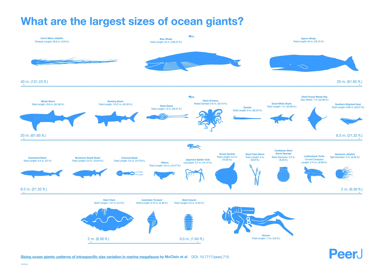 Lion's mane jellyfish and giant octopus: How big sea monsters ...
