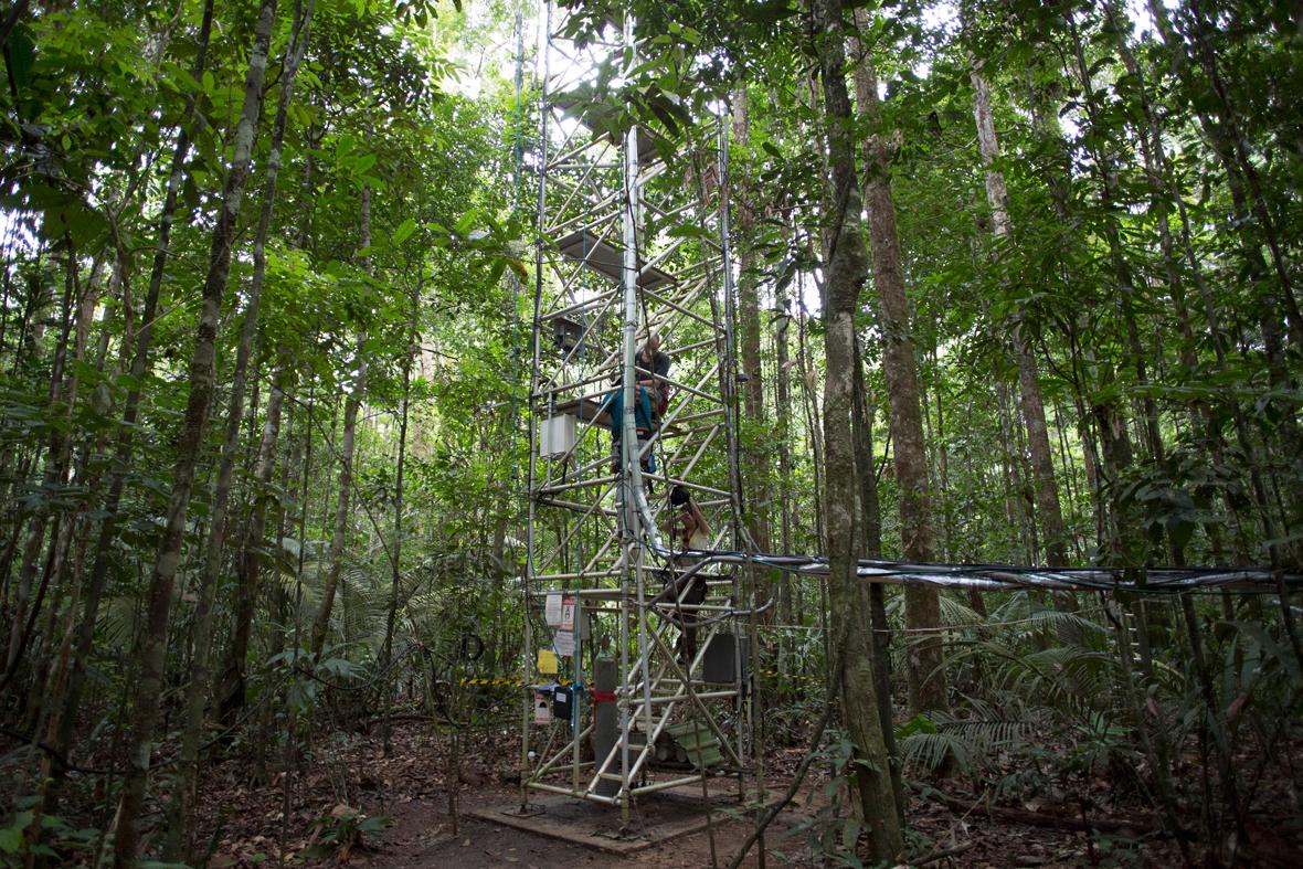 A jungle adventure essay
