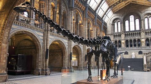 British National History Museum Tour