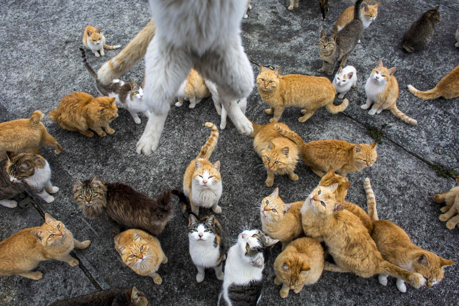Japan: Aoshima island overrun by cats