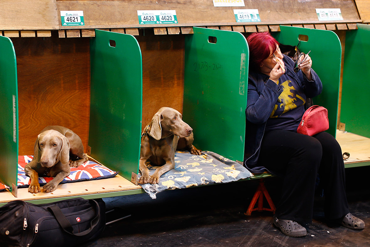 Trade Stands Crufts 2015 : Crufts nearly dogs travel to birmingham nec