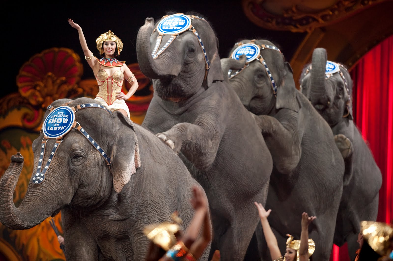 L Elephant Carnival Of The Animals Ringling Bros &...