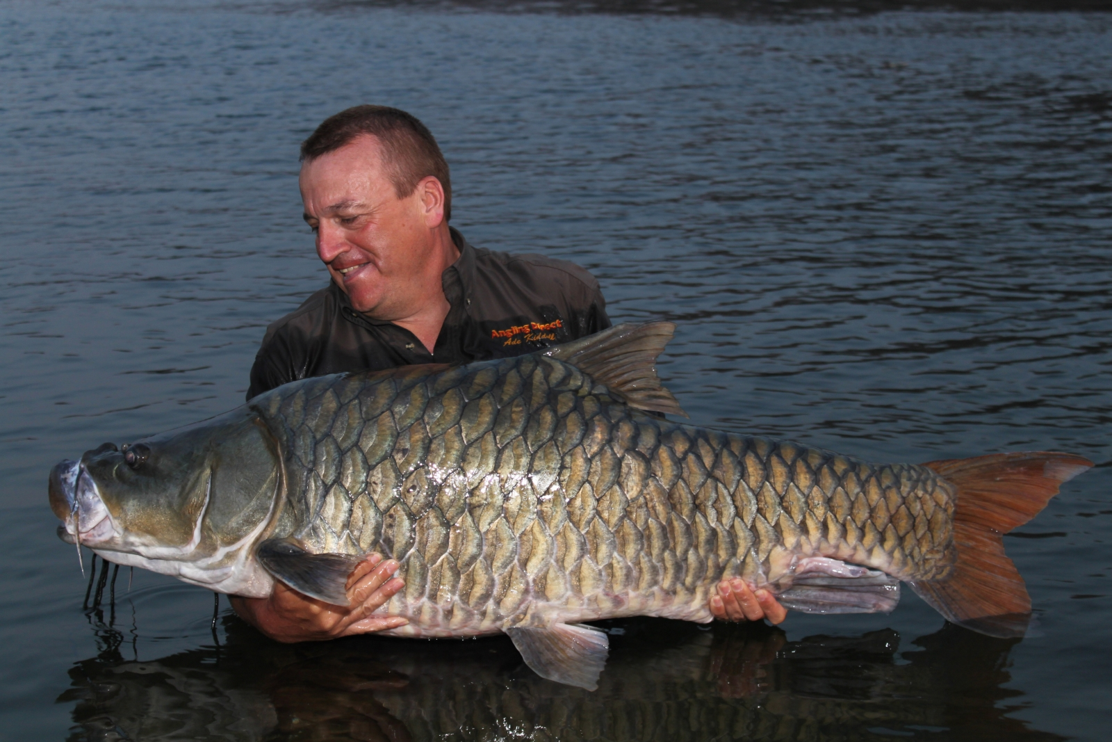 Indian giant fish yet to be named is on brink of extinction