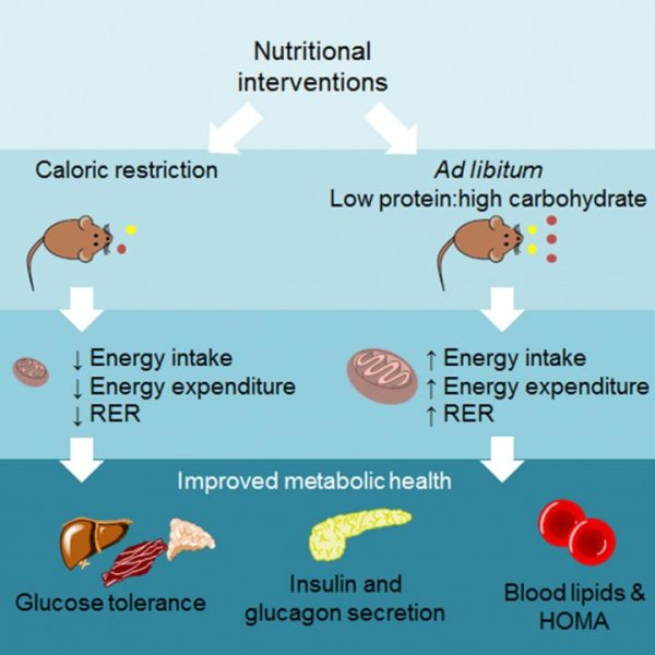 What Is The Benefit Of Protein Drinks