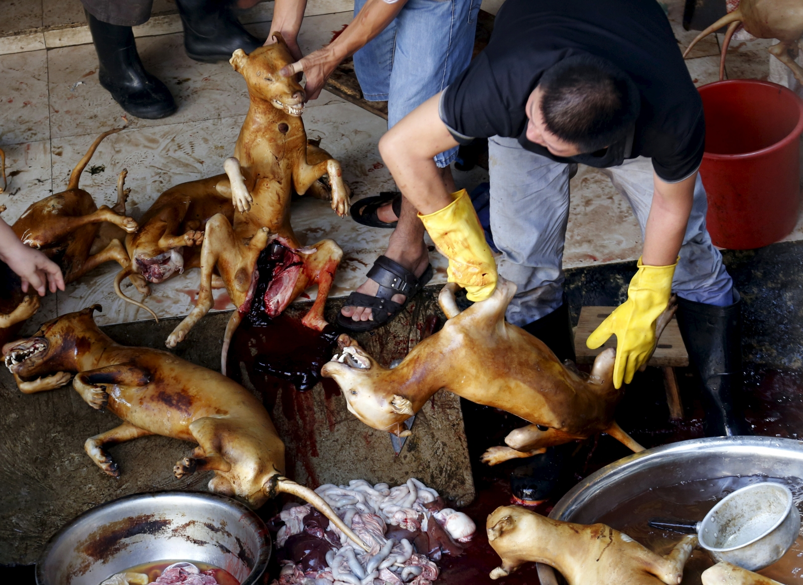 China's Dog Meat Festival: 10 things you need to know ... - photo#40
