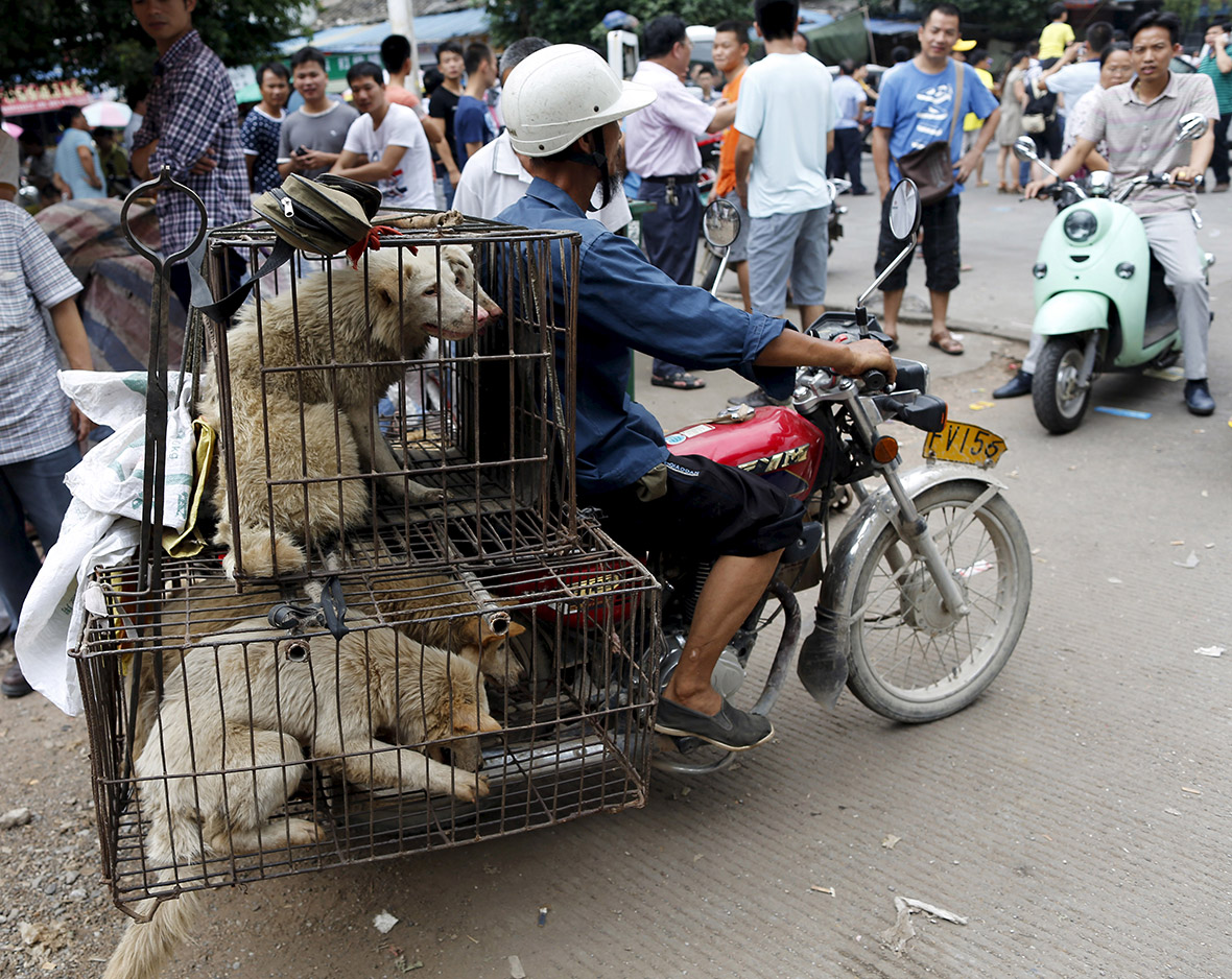 Inside Yulin Dog Meat Festival: The silence of dogs ... - photo#13