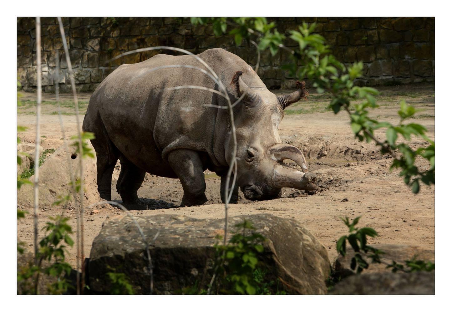 Safari Kemp - Zoo Dvщr Krбlovй - Hjemmeside