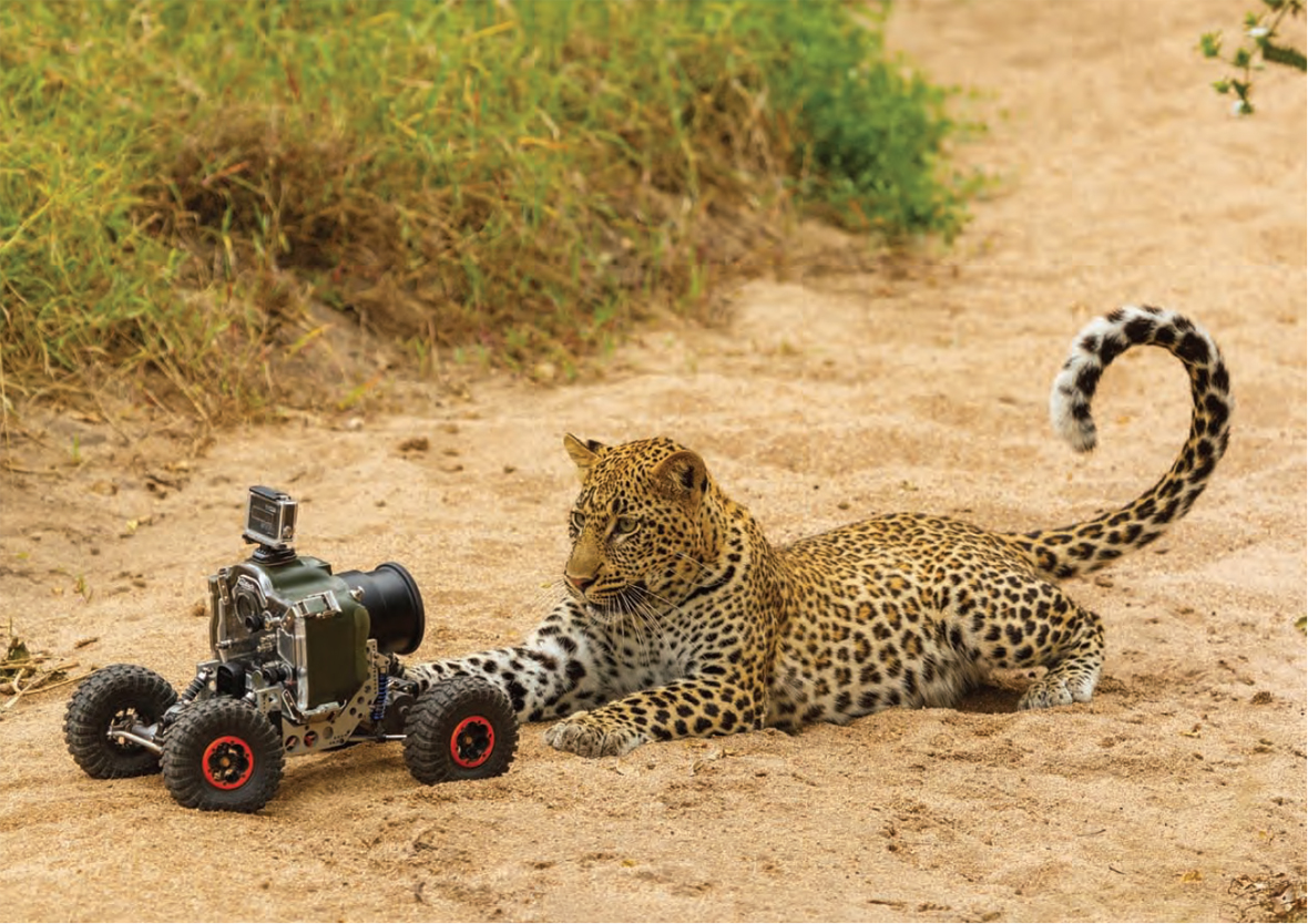 Africa On Safari Drones And Remote Controlled Buggies Capture Intimate Wildlife Photographs