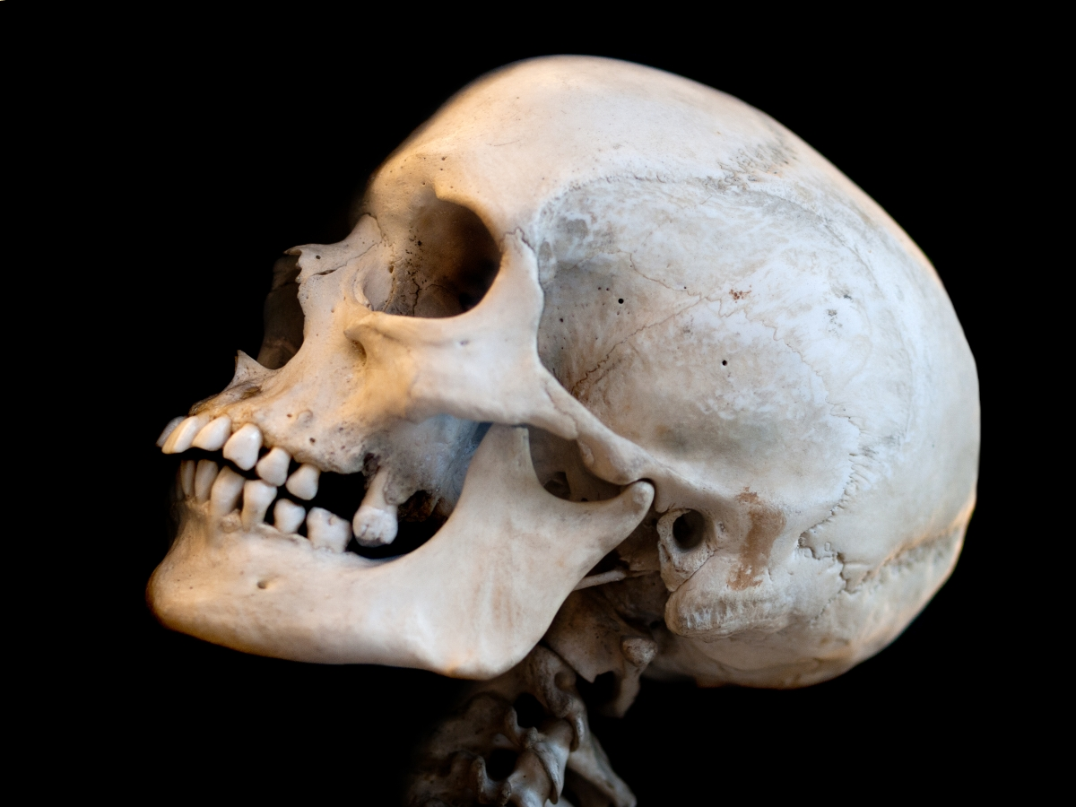 Scientists to regrow skulls with stem cells and advanced 3D printing technology