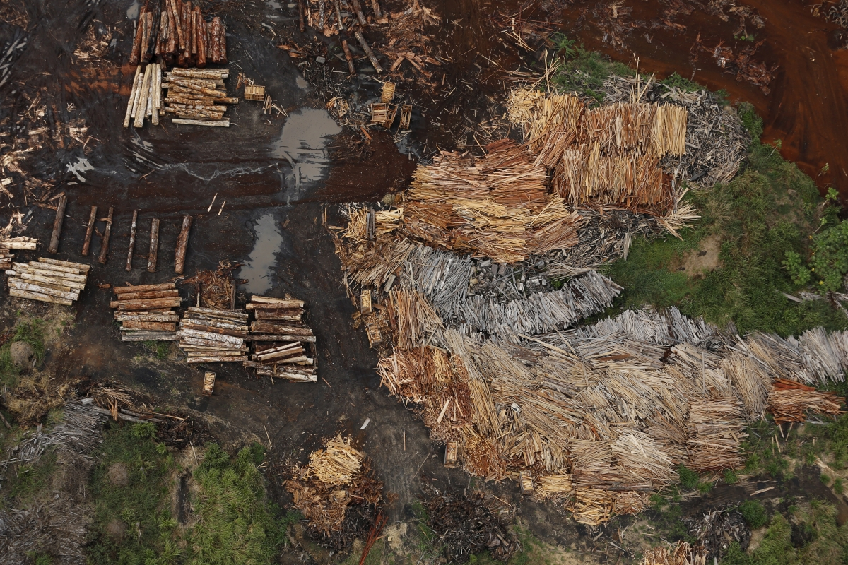 deforestation of the amazon rain forest Learn about the manmade and natural causes of deforestation  the world's rain  the most feasible solution to deforestation is to carefully manage forest.