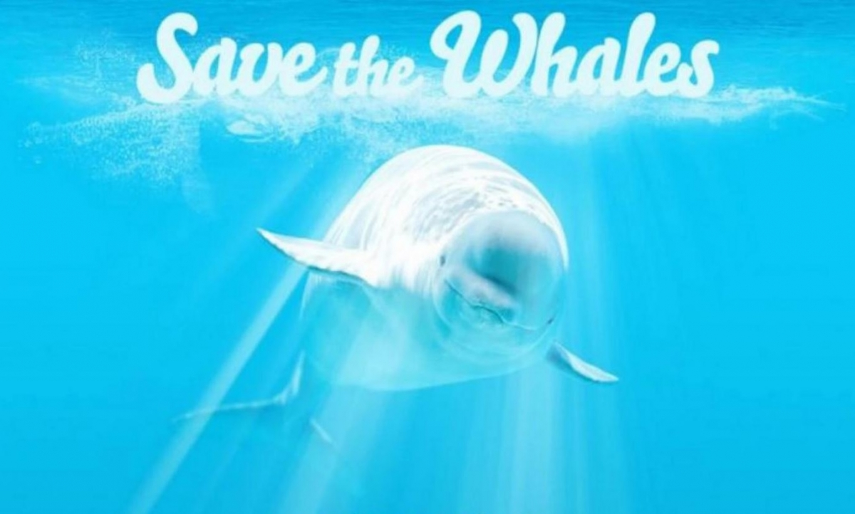 PornHub save the whales