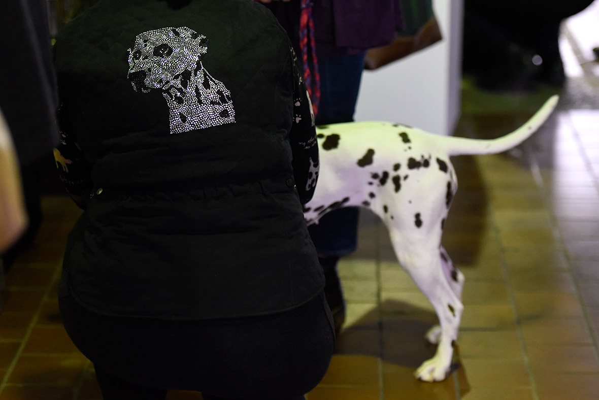 The 140th Westminster Kennel Club Dog Show At Madison Square Garden In New York