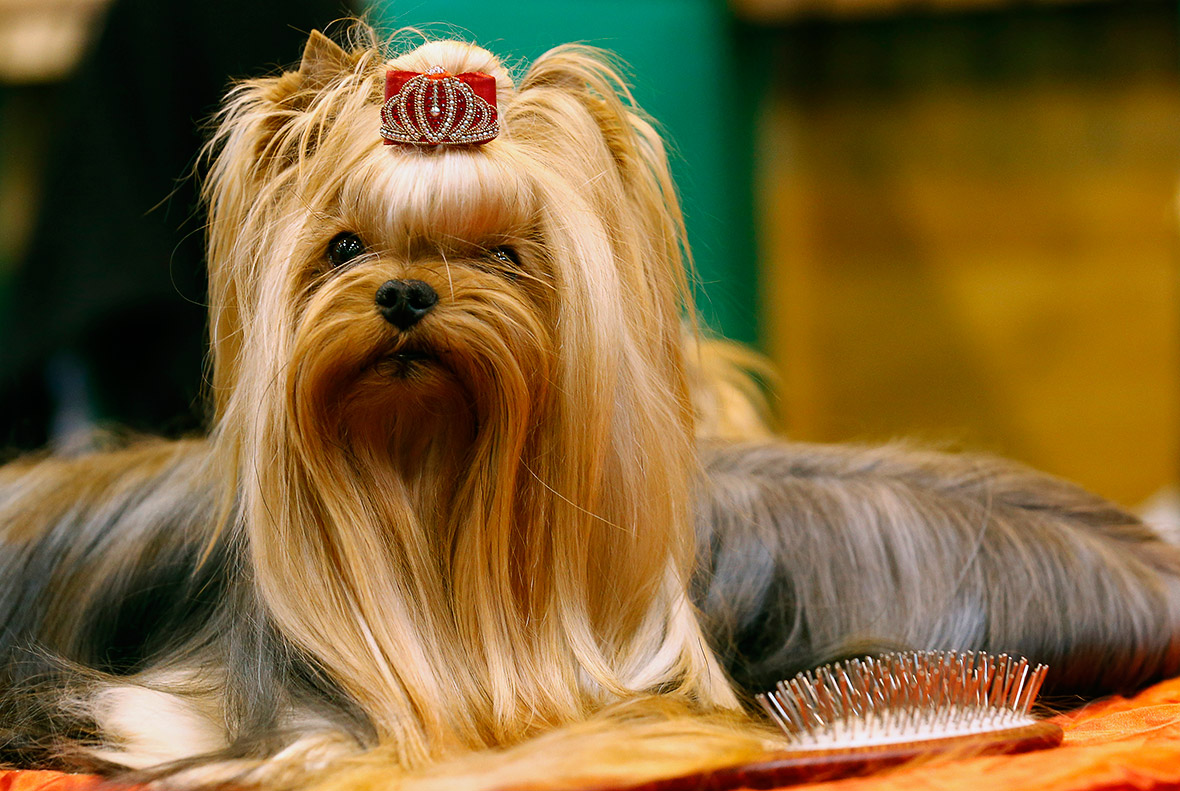 Dog Tv Show S