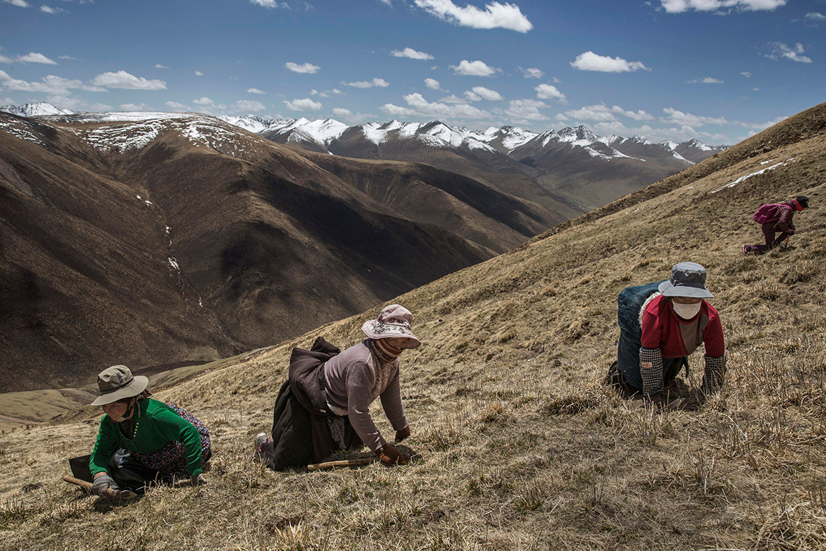 beautiful photos of tibetan nomads u0026 39  search for a prized
