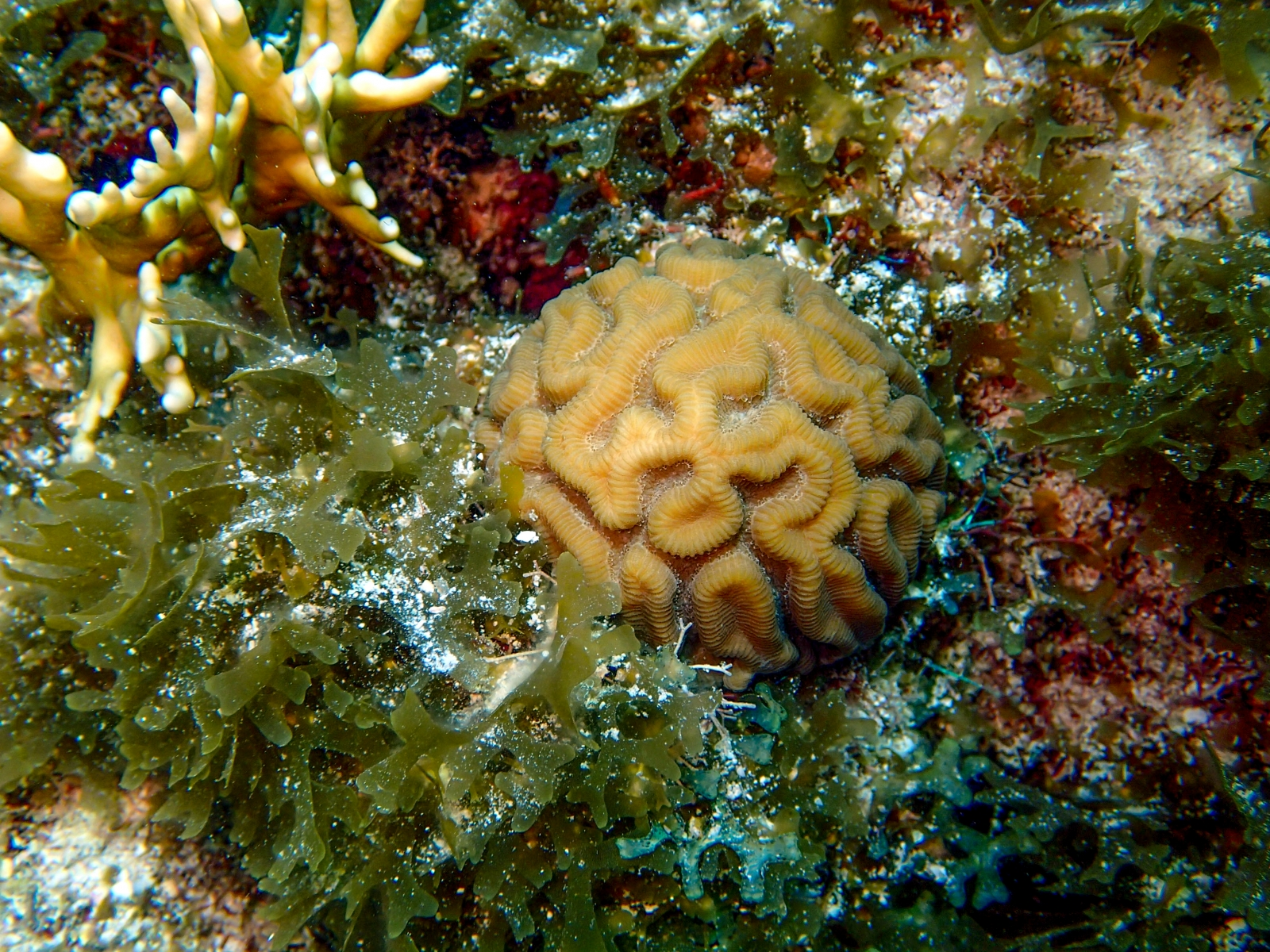 Corals are dying worldwide to triple threat of overfishing ...