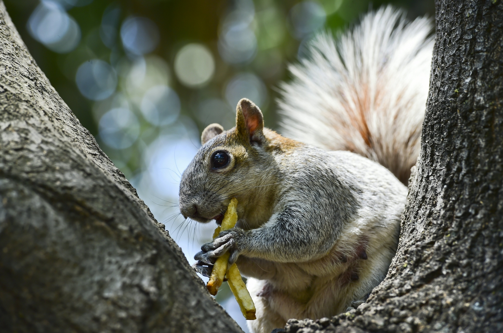 Man told to get rid of his 'emotional support' squirrel or face eviction