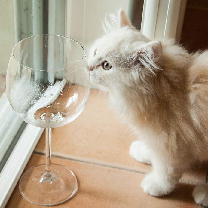 Your Cat Can Now Enjoy a Glass of Wine withYou