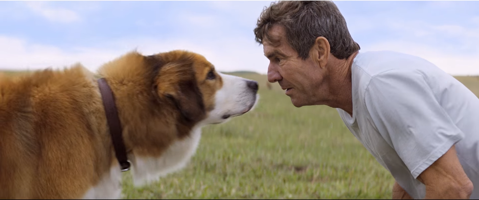 When Is A Dog S Purpose Out Uk