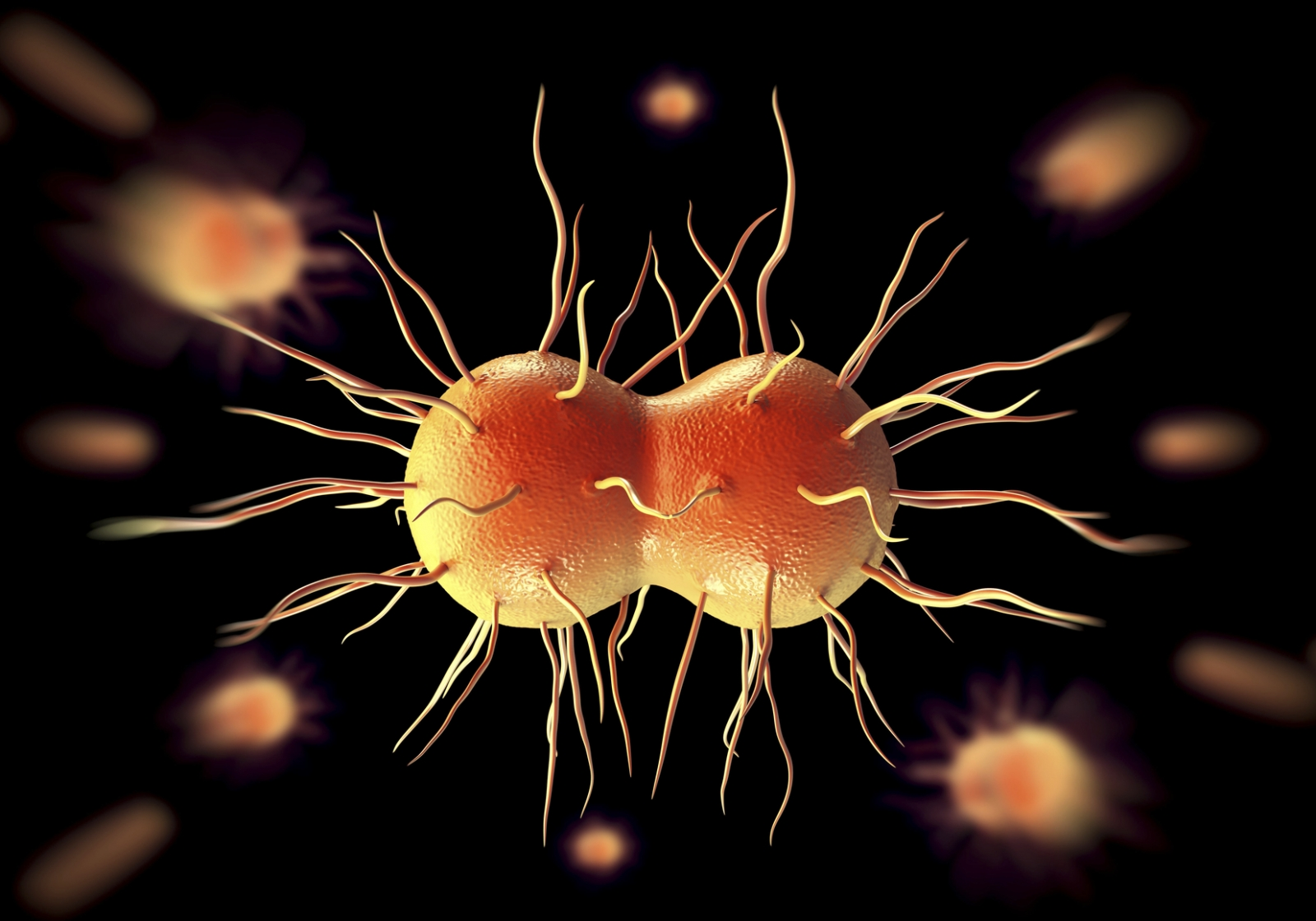 Gonorrhea Infection Diagram