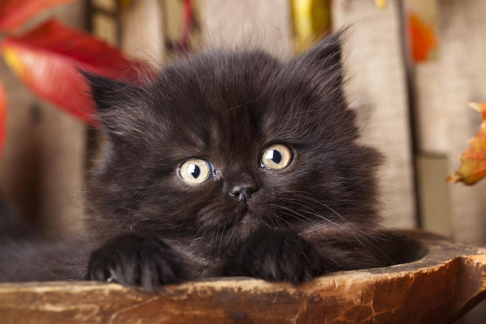 black-kitten.jpg