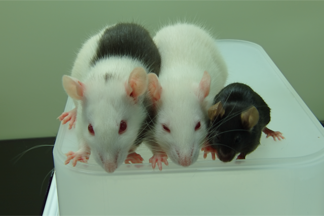 how to keep mice and rats out of avary