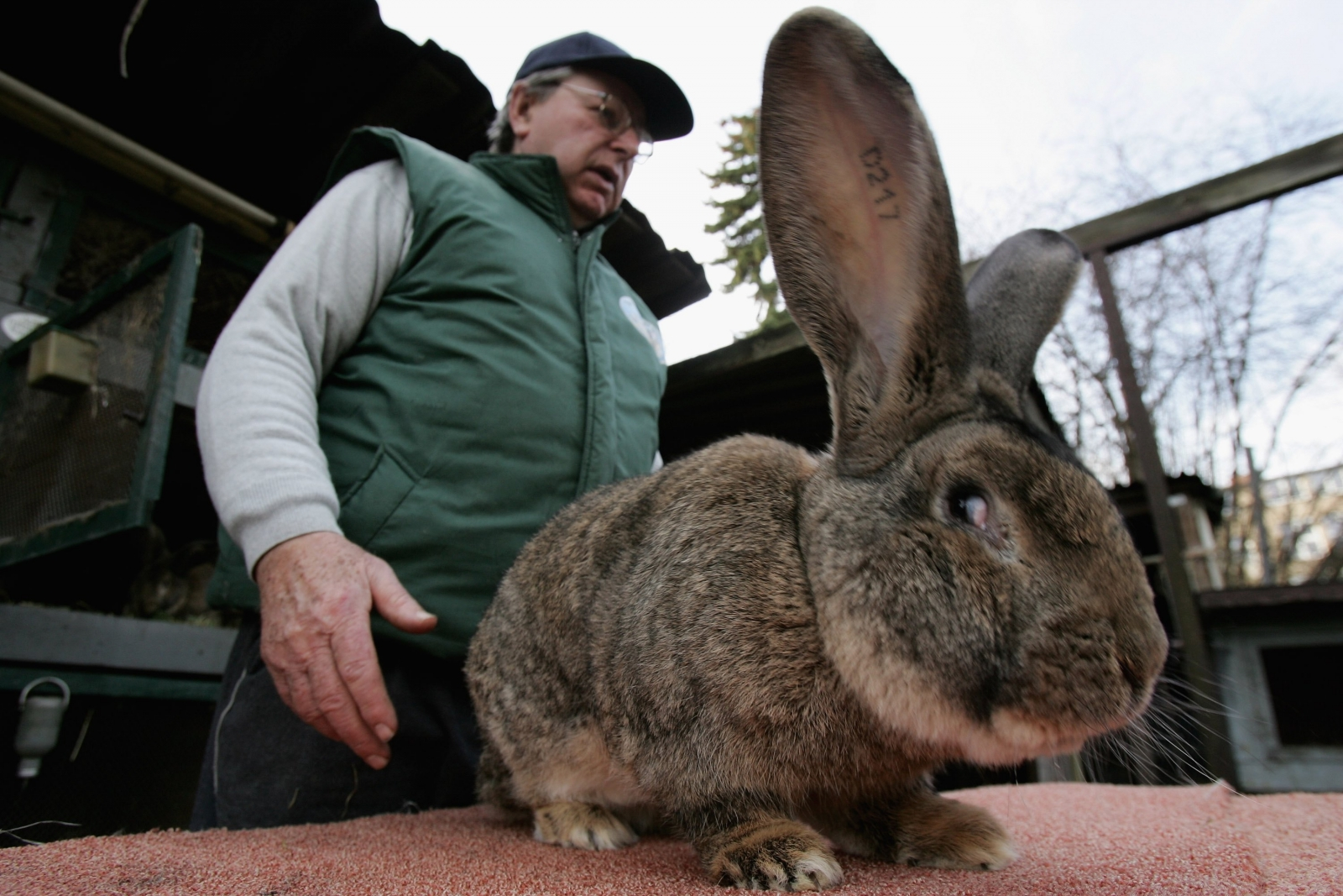 F Giant Rabbit United Airlines: Giant...